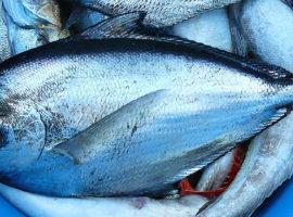 Fischmarkt Senj